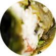 Omnivore Food Festival: Айзек Корреа готовит два пуэрториканских блюда. Изображение № 11.