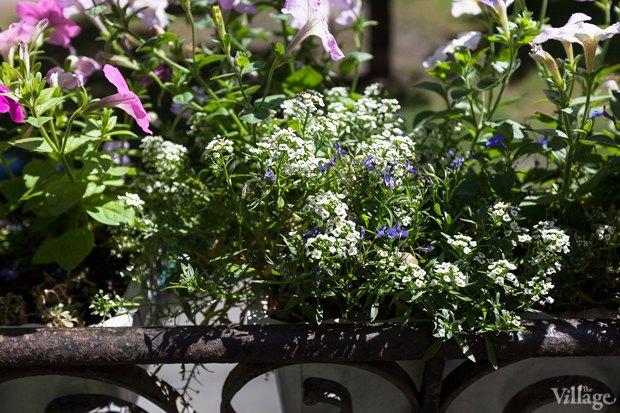 Где посадки: Что горожане выращивают на балконах иподоконниках. Изображение № 34.
