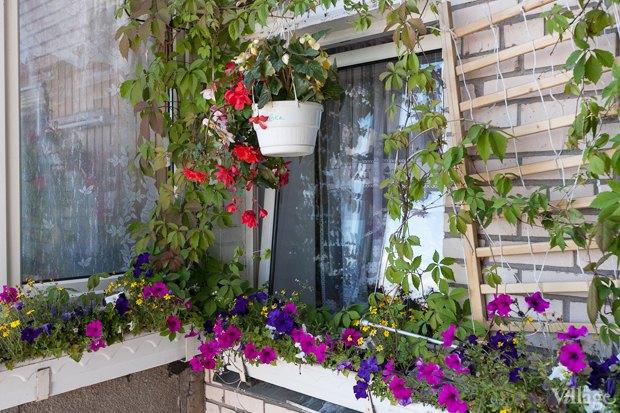 Где посадки: Что горожане выращивают на балконах иподоконниках. Изображение № 53.