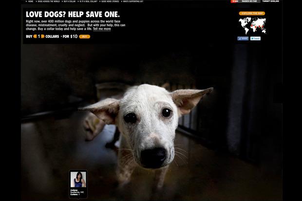 Иностранный опыт: Что делать сбездомными собаками. Изображение № 21.
