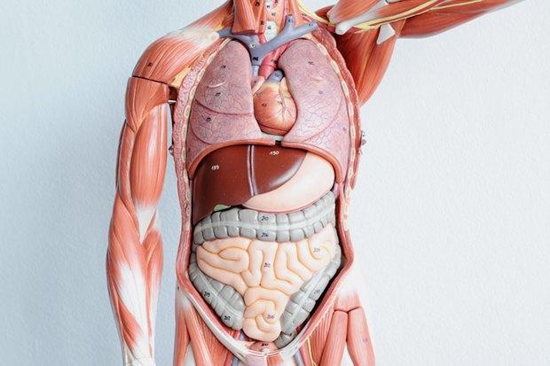 Возьми моё сердце: Как развивается трансплантология вРоссии. Изображение № 4.