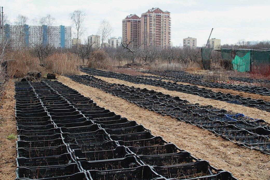 Почему отбирают земли уТимирязевской академии. Изображение № 17.