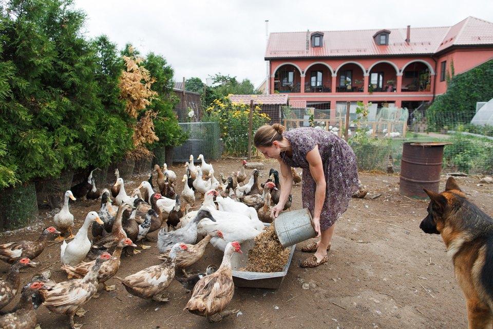 Как заработать наптичьей ферме. Изображение № 13.