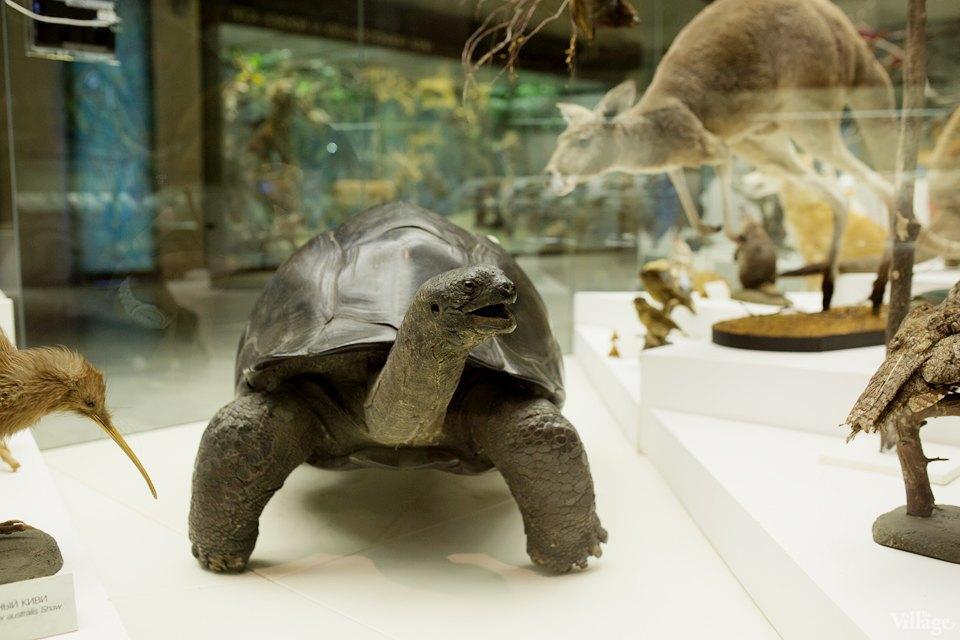Перемены в Дарвиновском музее: «Можно бегать, прыгать и шуметь». Изображение № 6.