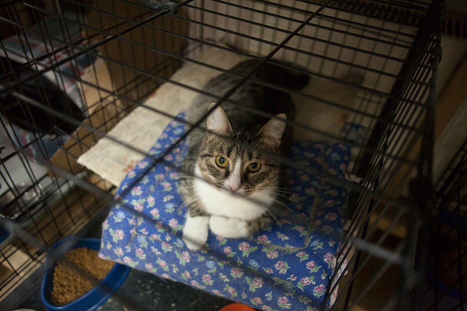 Коты иты: Как помочь брошенным животным. Изображение № 5.