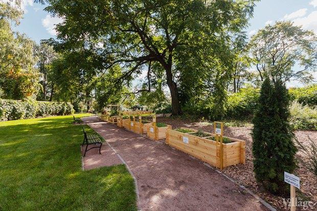 Фото дня: Что изменилось в Ботаническом саду. Изображение № 8.