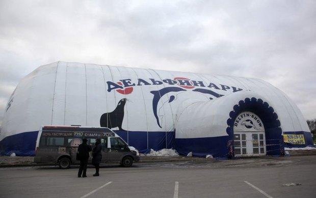 В Петербурге даст представления гастролирующий шатёр-дельфинарий. Изображение № 1.