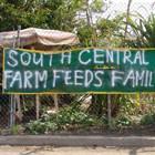 Весёлый фермер: 6 городских огородов. Изображение № 2.