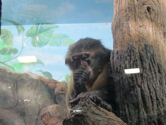 Зоозащитники просят прокуратуру проверить зоопарк вТЦ«Рио» . Изображение № 2.