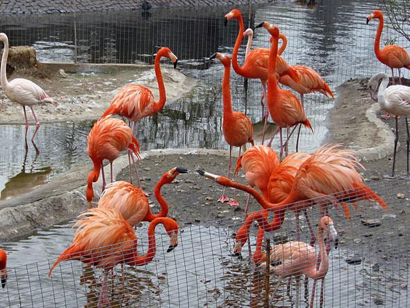 Московский зоопарк ждёт реконструкция. Изображение № 1.