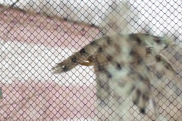 Подрезать крылья: Как работают орнитологи на аэродромах. Изображение № 30.