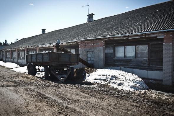 Народное хозяйство: 5 ферм, продукты которых можно купить в Петербурге. Изображение № 61.