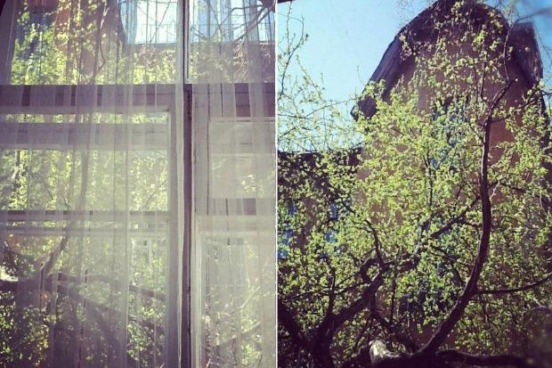 Личный опыт: Как спасти дерево под окном от вырубки. Изображение № 4.