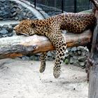 Как живёт и меняется Ленинградский зоопарк . Изображение № 24.
