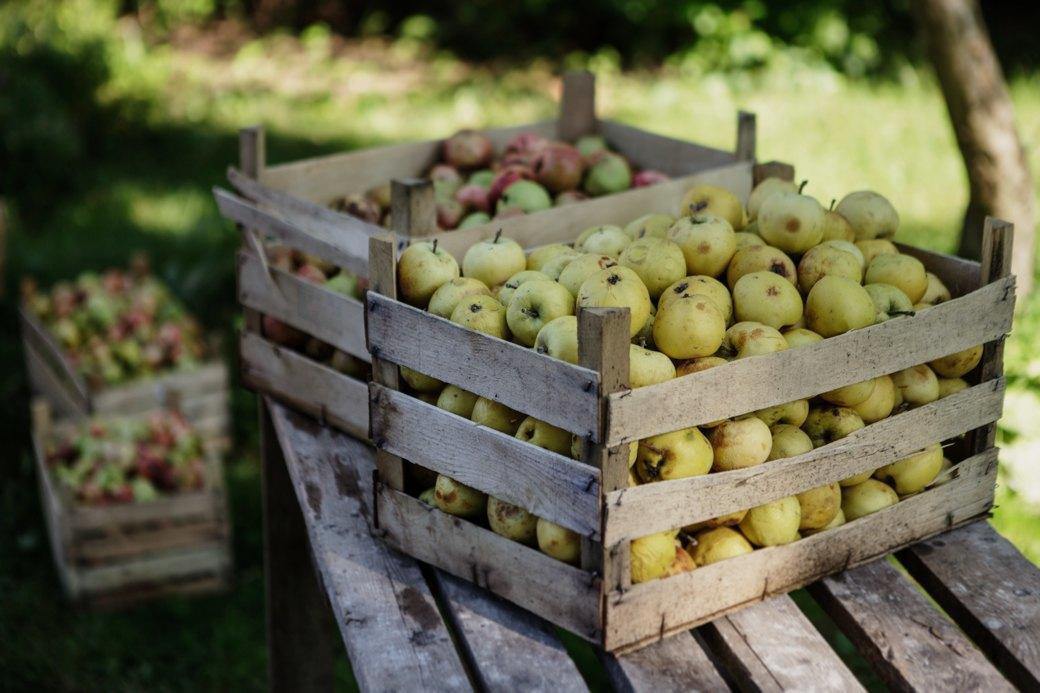 Партия «Яблоко»: Как организовать производство сидра на даче . Изображение № 2.