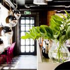 В Месте: Кафе «Бурый лис и ленивый пёс». Изображение № 12.