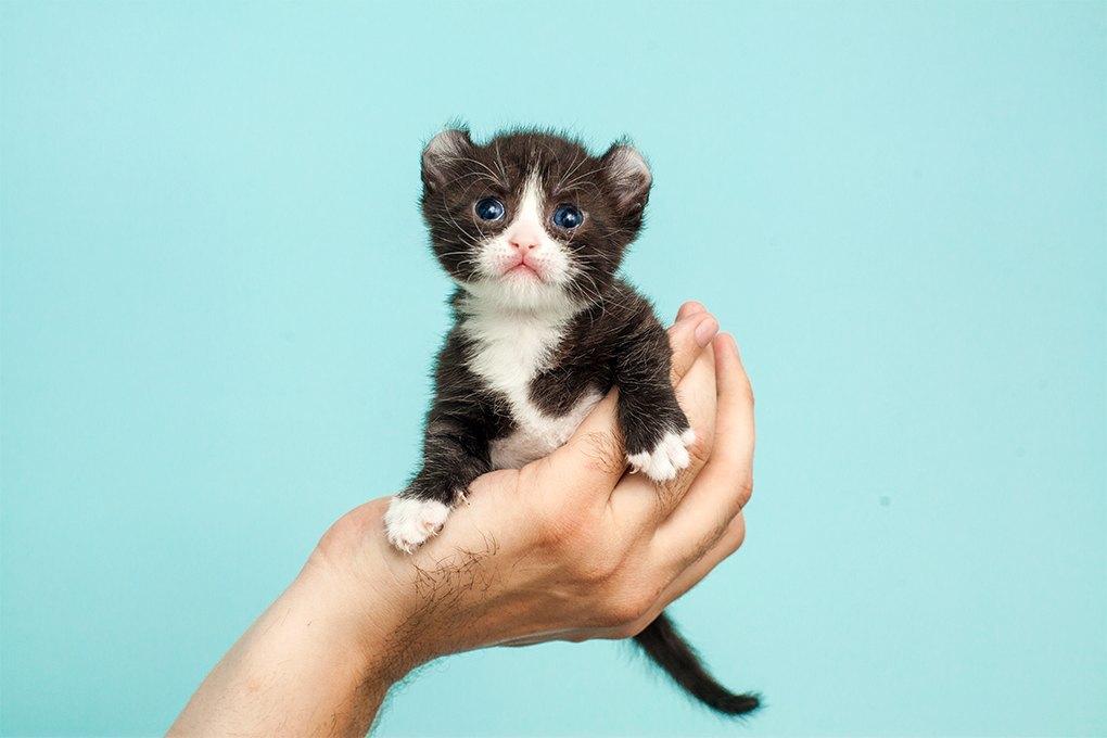 «Мурмулет»: Как заработать на котятах за полмиллиона рублей. Изображение № 2.