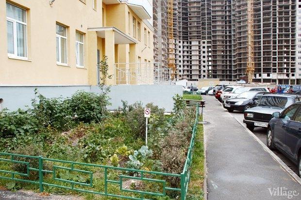На районе: Как разбить огород и выращивать бесплатные овощи для соседей в Шушарах. Изображение № 14.