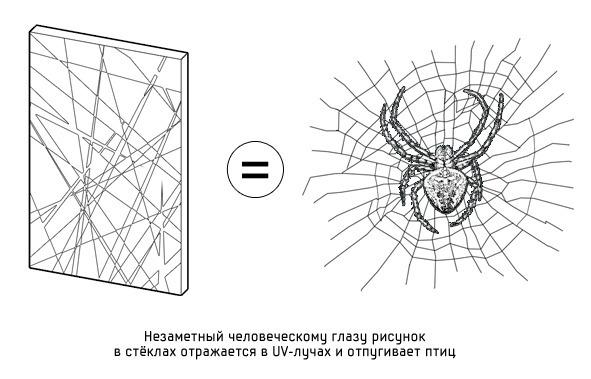 Дизайн от природы: Стекло-паутина и павильон — морской еж в Германии. Изображение № 2.