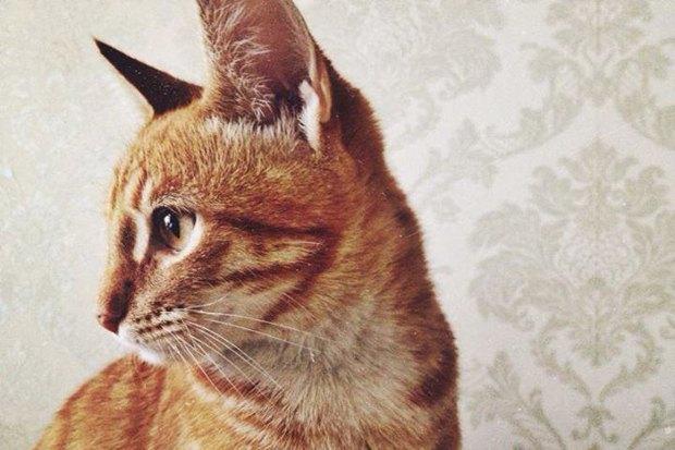Итоги недели: Похищенный кот, новый сервис по поиску жилья и закрытие музея Маяковского. Изображение № 2.
