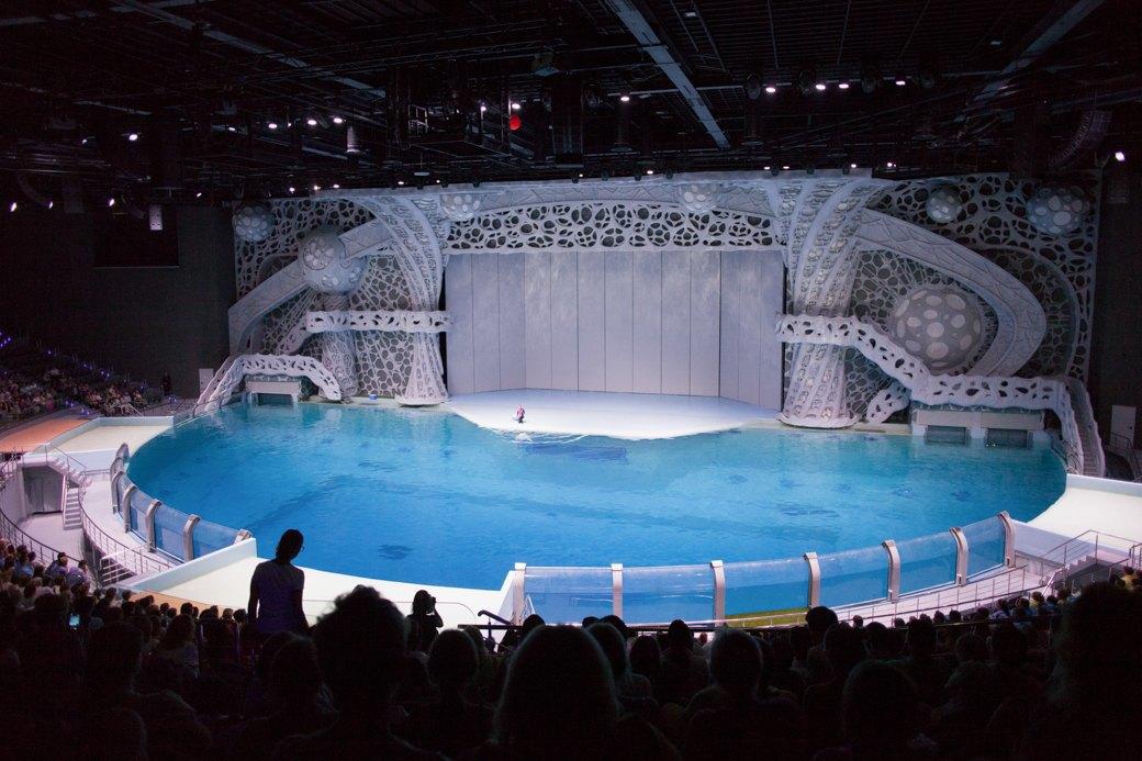 «Главные здесь — косатки, но самые милые — моржи»: На ВДНХ открылся океанариум. Изображение № 13.
