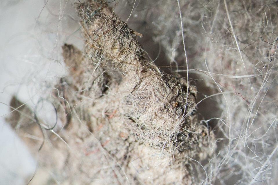 Как выглядит ваша домашняя пыль подмикроскопом. Изображение № 4.