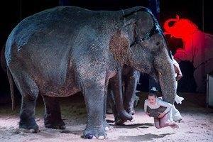 Moscow Design Week, цирк огромных зверей, Джиллиан Андерсон втеатре иещё 16событий. Изображение № 16.