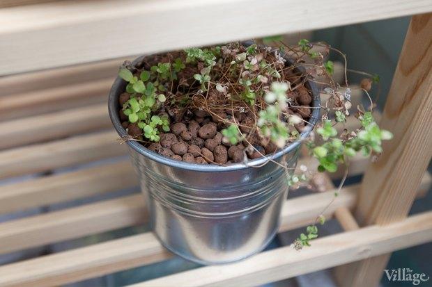 Где посадки: Что горожане выращивают на балконах иподоконниках. Изображение № 12.