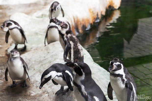 Директор московского зоопарка: «Погода была ужасной, всё выглядело очень грустно». Изображение № 23.